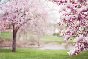 """5 pasos para """"limpiar de primavera"""" sus relaciones Aprenda 4"""